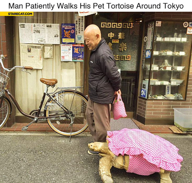 Man patiently walks his pet tortoise around Tokio