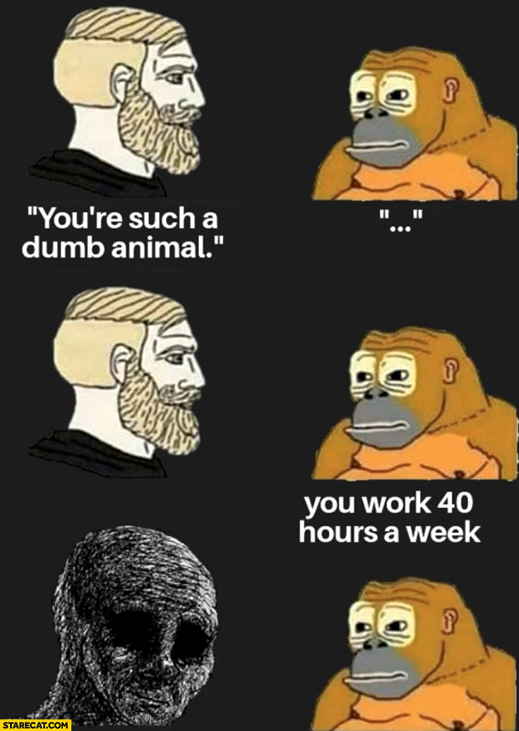 Man to monkey: you're such a dumb animal, monkey: you work 40 hours a week