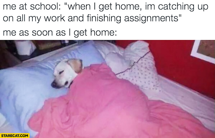 Me at school: when I get home I'm catching up on all my work and finishing assignments. Me as soon as I get home: sleeping dog