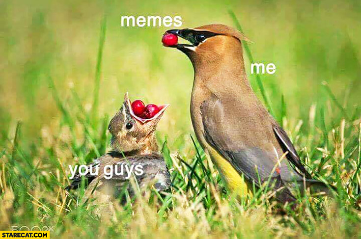Me, memes, you guys. Bird feeding young with memes