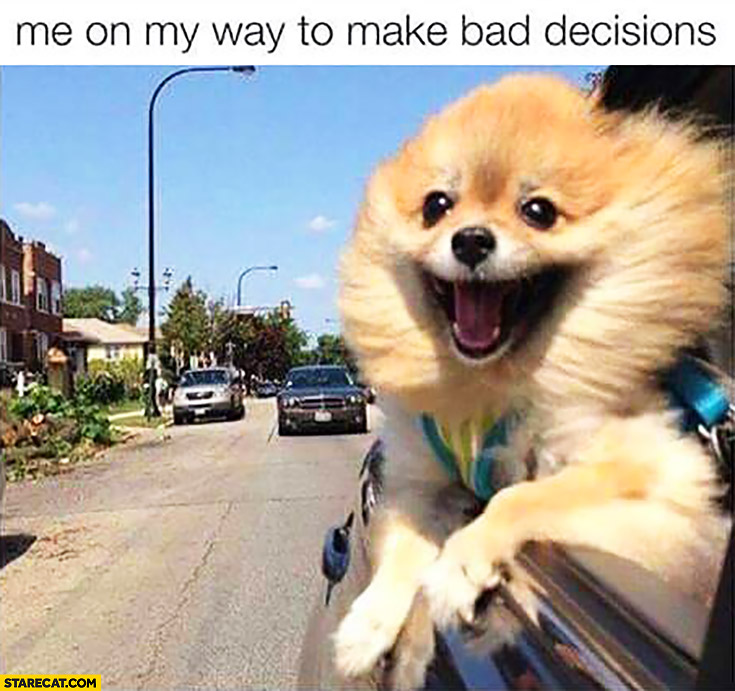 Me on my way to make bad decisions happy dog
