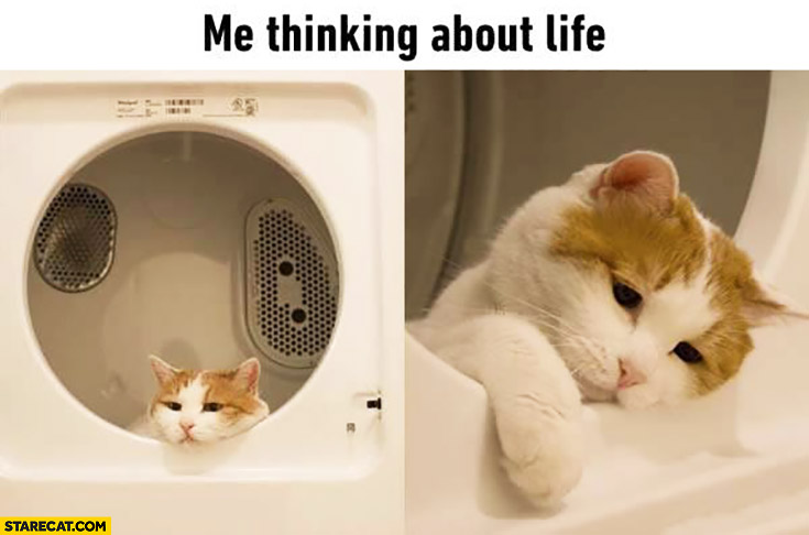 Me thinking about life. Sad cat in a washing machine