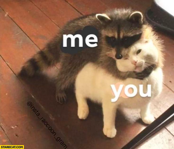 Me, you raccoon hugging cat