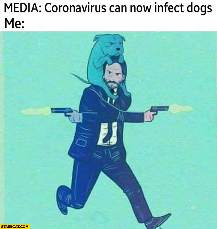 Media Coronavirus Can Now Infect Dogs Me John Wick Starecat Com