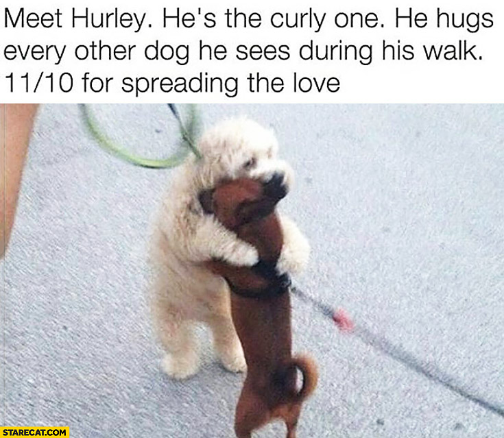 Meet Hurley. He's the curly one, he hugs every other dog he sees during his walks