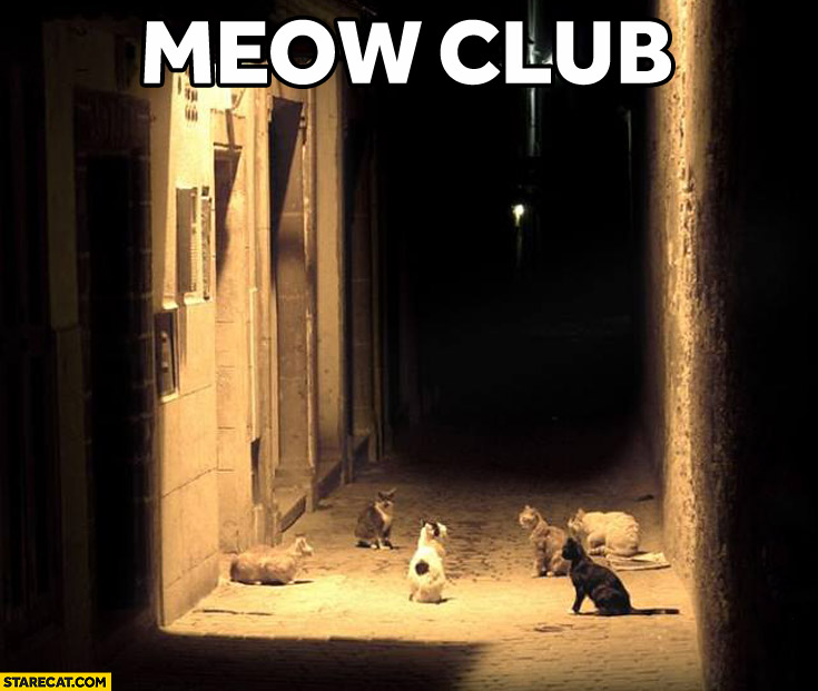 Meow club fight club cats