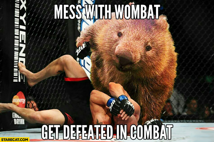 Mess with wombat get defeated in combat