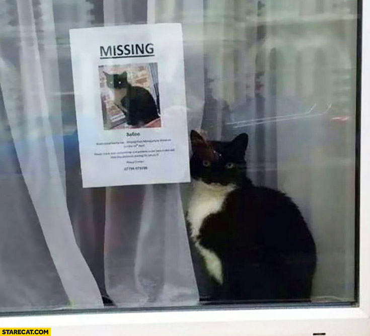 Missing cat fail not really missing