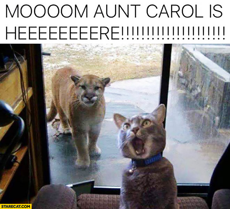 Mom aun't carol is here yelling cat lion cheetah