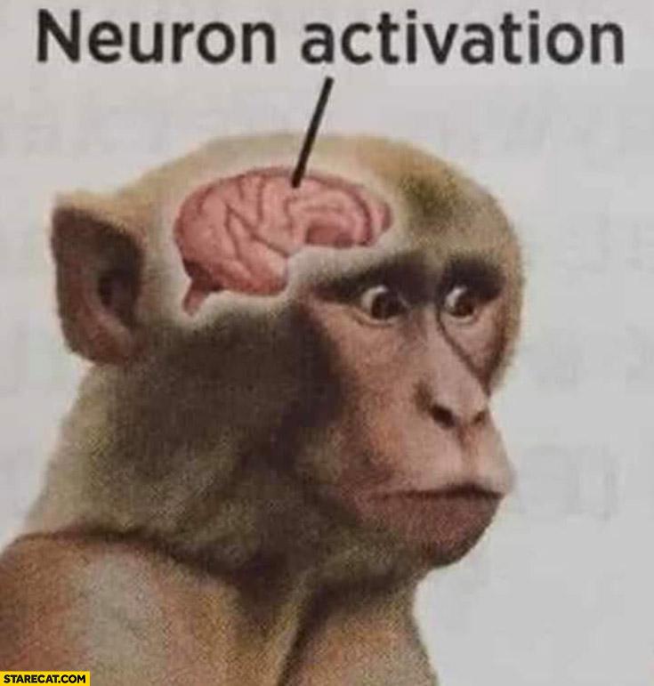 Monkey brain neuron activation meme