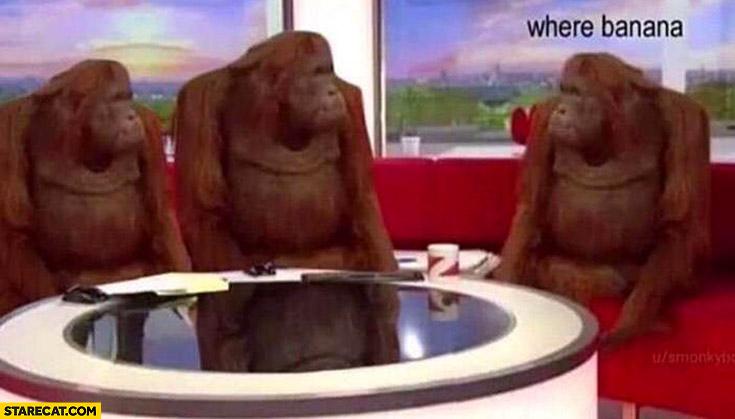 Monkeys where banana monke