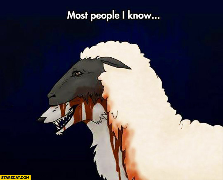 Most people I know wolf sheep