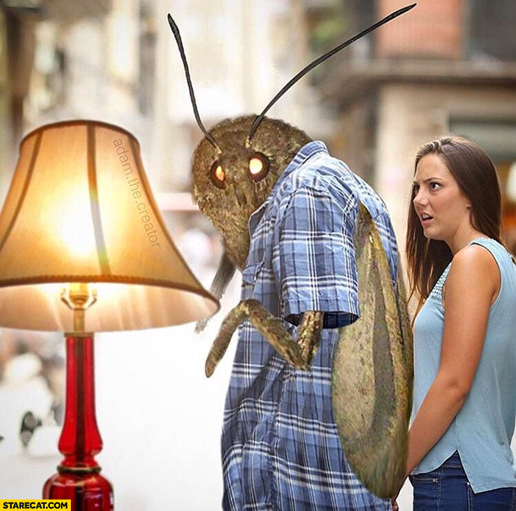 Moth prefers a lamp instead of his girlfriend meme