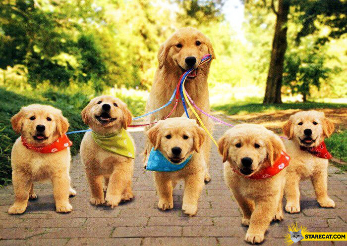 Mum dog walking her puppies