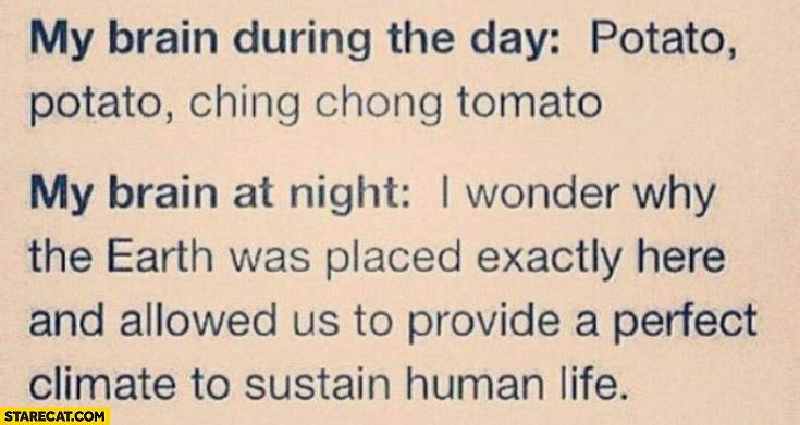 My brain during the day potato vs my brain during night