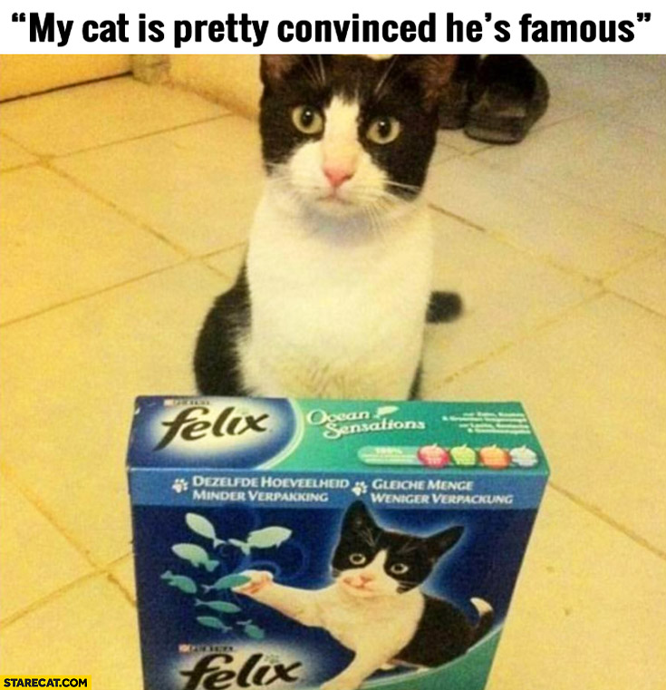 My cat is pretty convinced he's famous identical cat on packaging