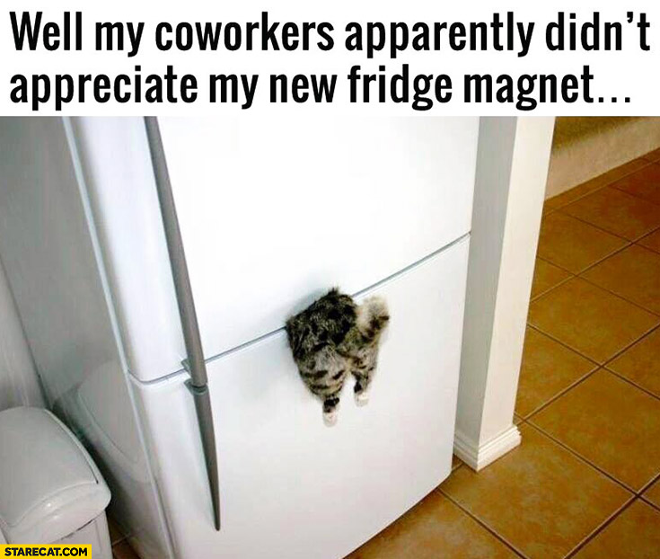 My coworkers apparently didn't appreciate my new fridge magnet. Trapped cat stuck in fridge