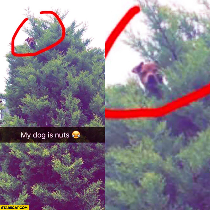 My dog is nuts got on top of a tree