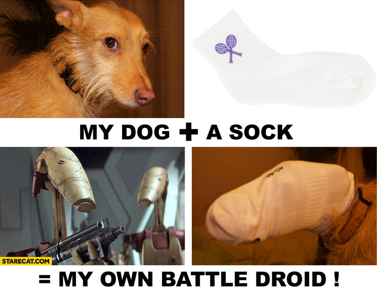 My dog plus a sock equals my own battle droid