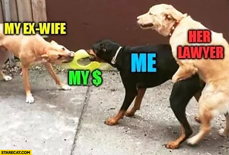 My ex wife, my money, me, her lawyer. Dogs fighting