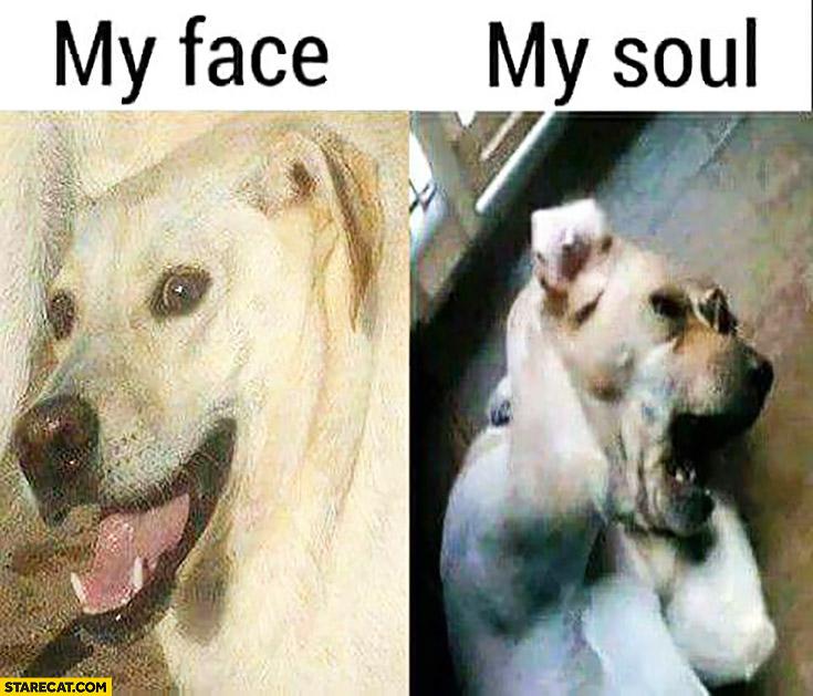 My face happy dog vs my soul disturbed dog