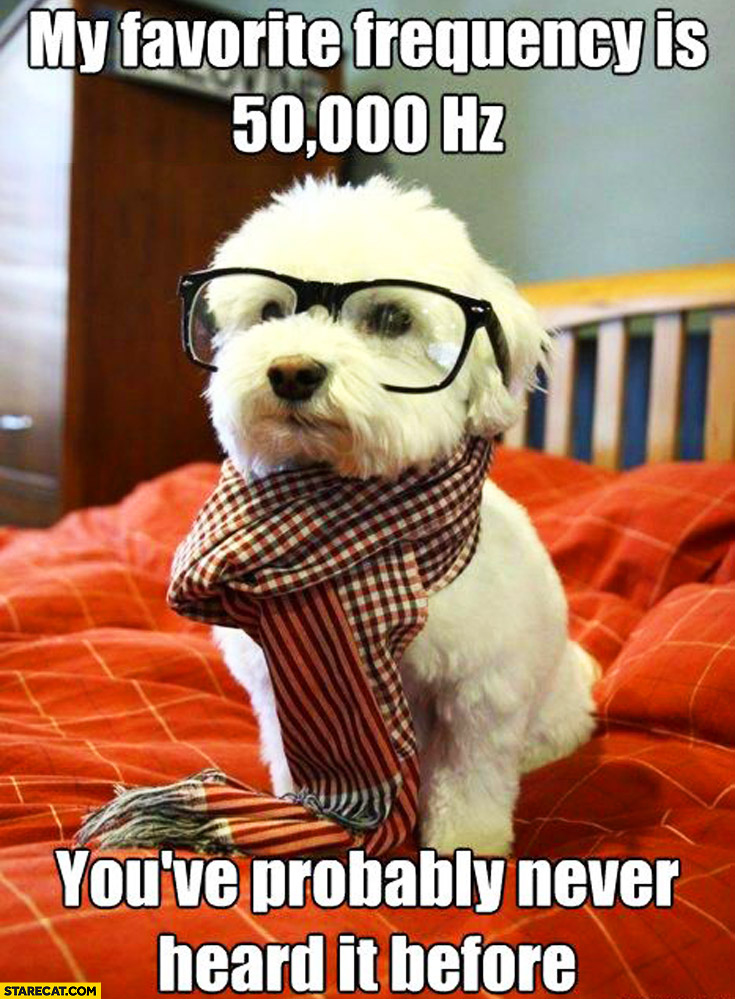 My favourite frequency is 50k hz you've probably never heard it before hipster dog
