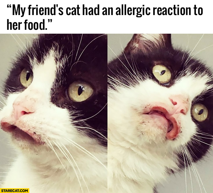 My friend/s cat had an allergic reaction to her food