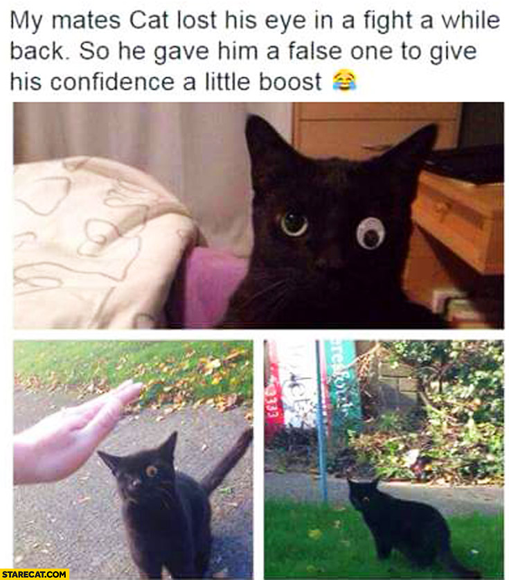 My mates cat lost his eye in a fight a while back. He gave him false one to give his confidence a little boost fake eye