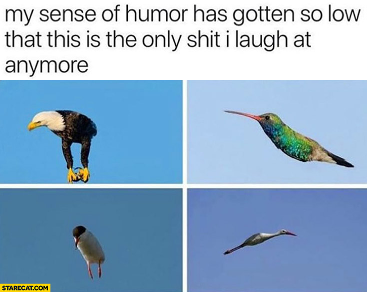 My sense of humor has gotten so low that this is the only shit I laugh at anymore birds without wings
