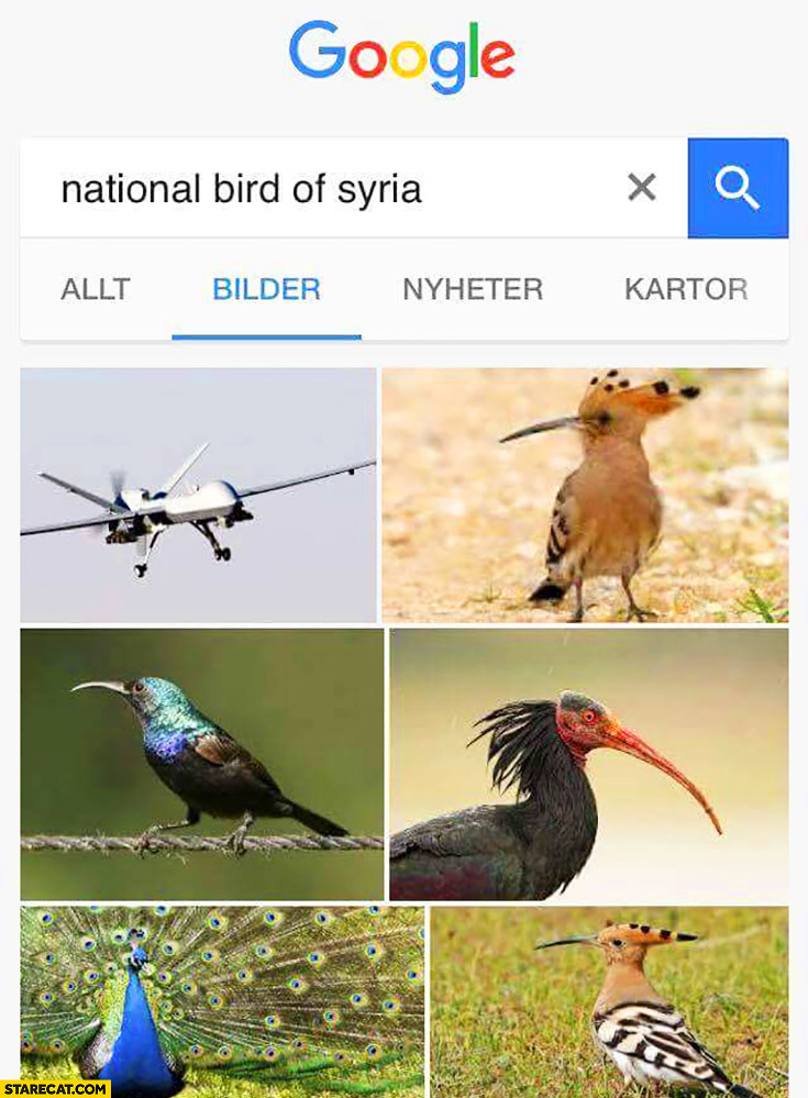 National bird of Syria drone Google image search