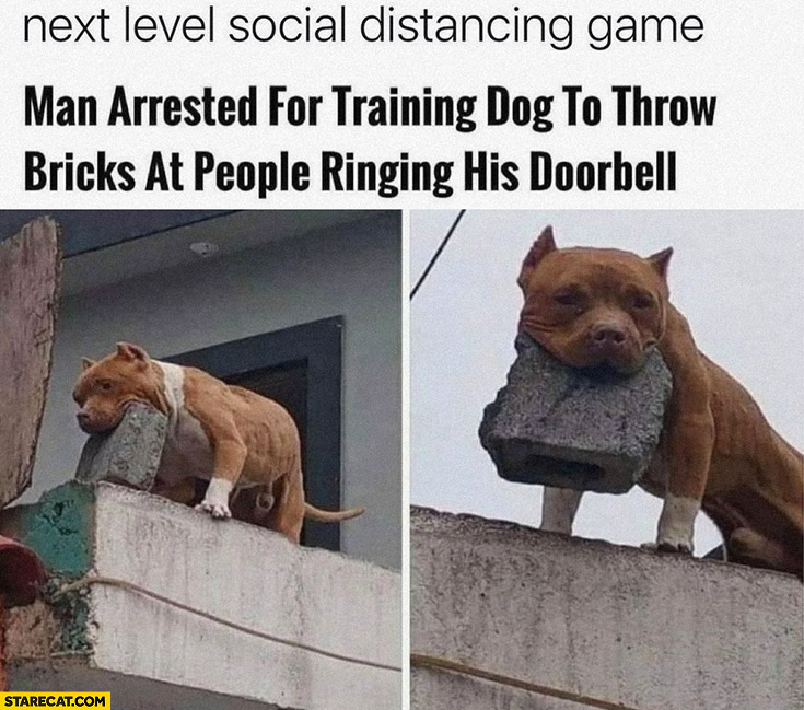 Next level social distancing game: man arrested for training dog to throw bricks at people ringing his doorbell