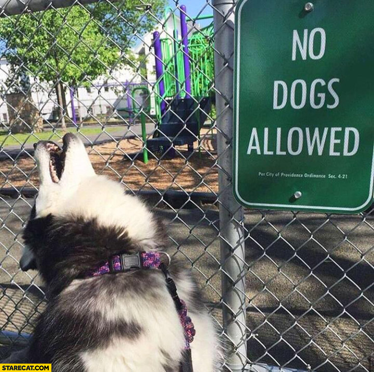 No dogs allowed dog yelling in front of a sign
