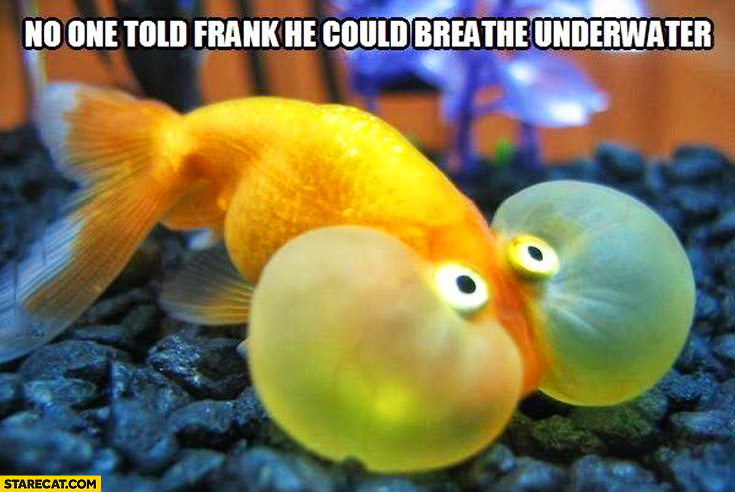 No one told Frank he could breathe underwater fish