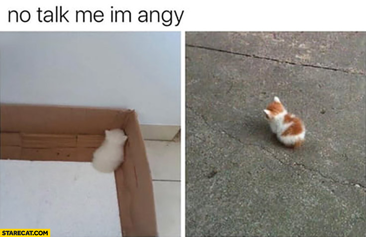 No talk to me I'm angry small cat kitten