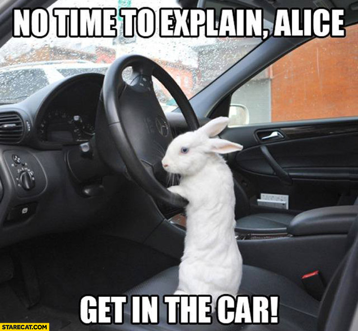 No time to explain get in the car bunny rabbit