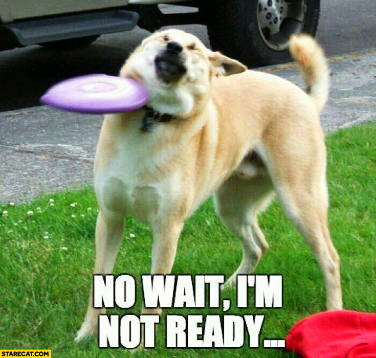 No wait I'm not ready dog hit by a frisbee