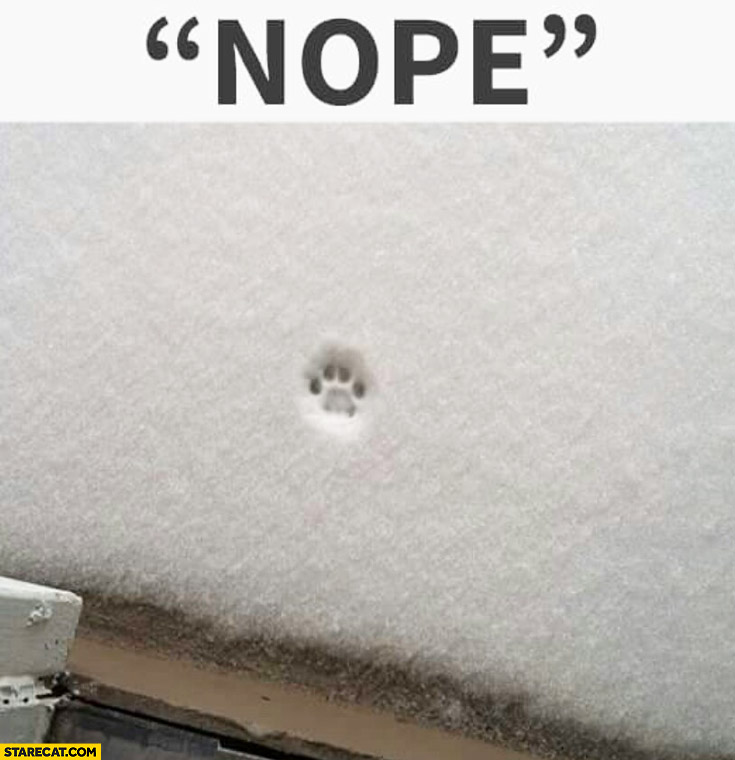 Nope cat going out snow paw mark