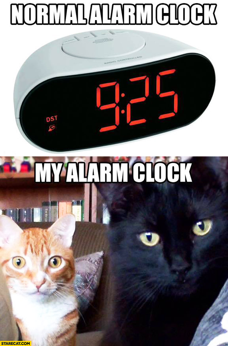 Normal alarm clock, my alarm clock cats