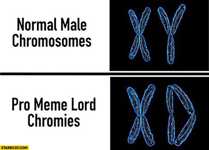 Normal male chromosomes XY, pro meme lord chromies XD