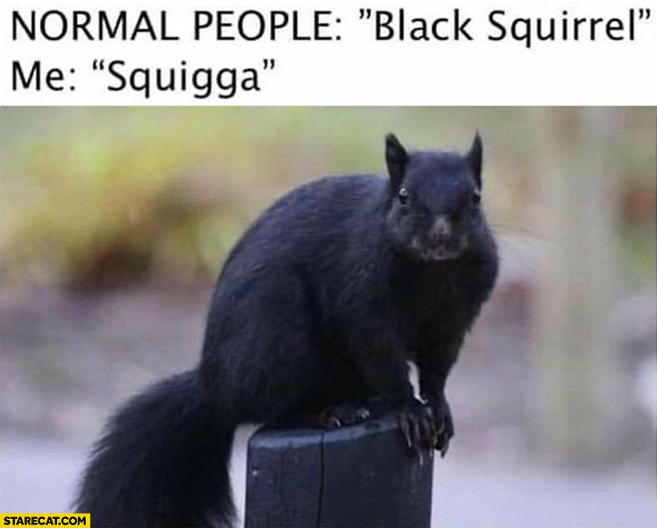 Normal people: black squirrel, me: squigga