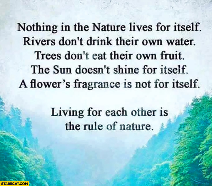 Nothing in the nature lives for itself – rivers don't drink their own water, trees don't eat their own fruit. Living for each other is the rule of nature quote
