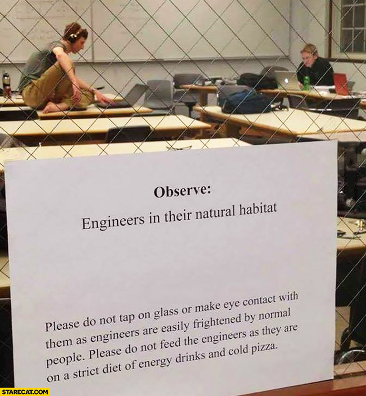 Observe Engineers In Their Natural Habitat Starecat Com