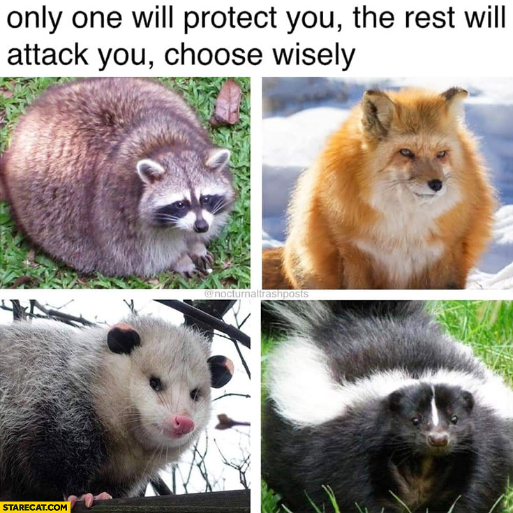 Only one will protect you, the rest will attack, you choose wisely