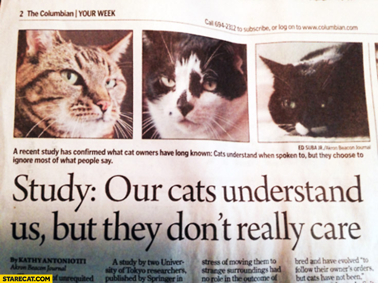 Our cats understand us but they don't really care