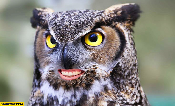 Owl with human mouth photoshopped