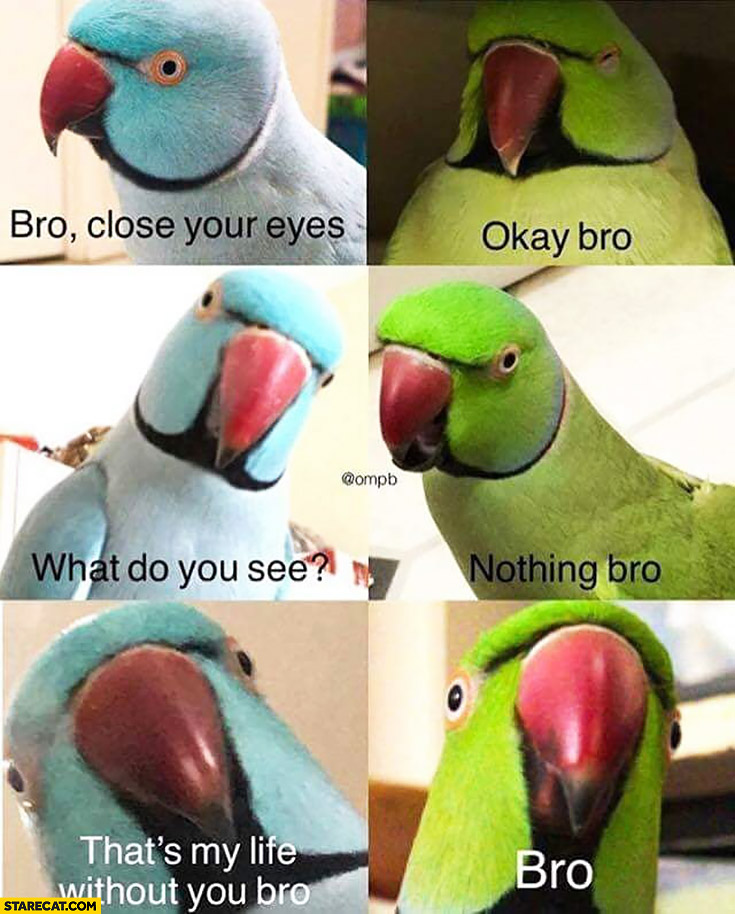 Parrots: bro close your eyes, okay bro, what do you see? Nothing bro. Thats my life without you bro