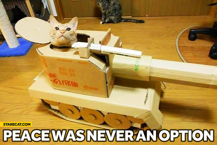 Peace was never an option cat paper tank | StareCat.com
