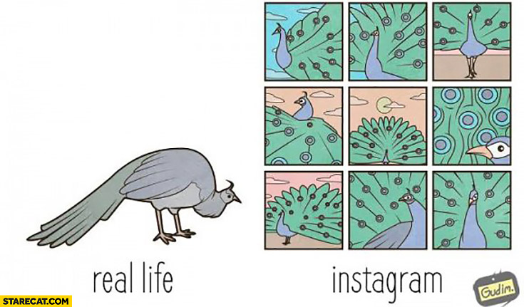 Peacock real life vs instagram comparison