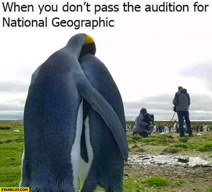 Penguins when you don't pass the audition for National Geographic