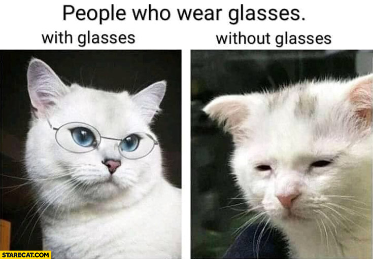 People who wear glasses with and without glasses cat comparison